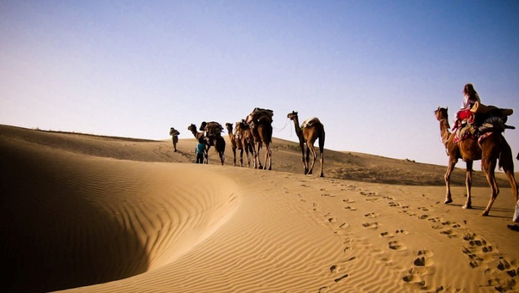 camel-safari-thar-desert-far.jpg